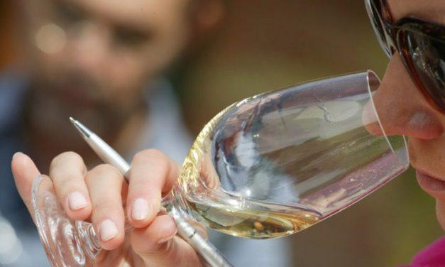 Zmysł węchu a wino