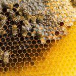 Apiterapia. Wosk pszczeli.