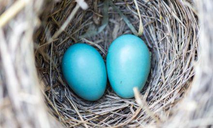 Wszystko o jajkach!