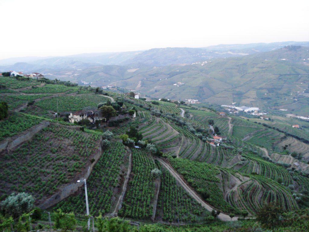 tarasowe uprawy w Portugalii